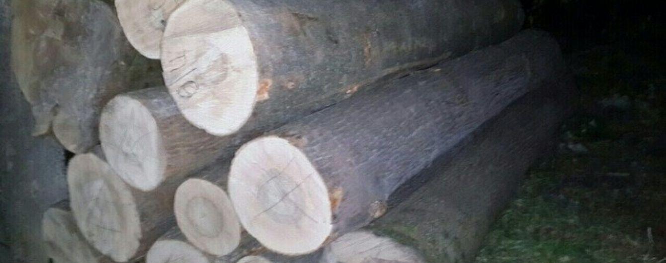На Чернігівщині лісник із бізнесменом вирубували і торгували цінною деревиною