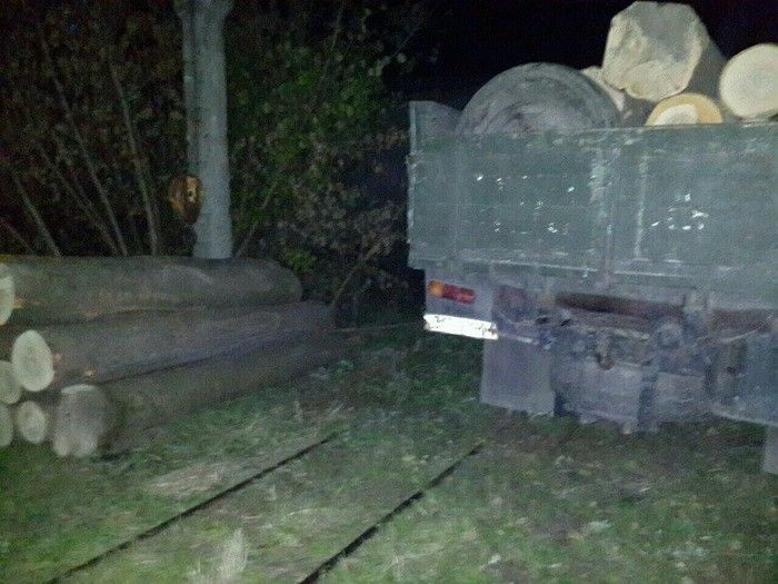 На Чернігівщині лісник із бізнесменом вирубували і торгували цінною деревиною_2