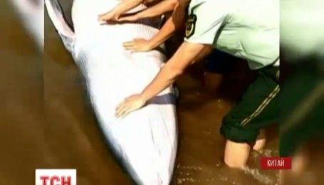 Рятувальна операція: мешканці села на півдні Китаю врятували 5-метрового кита