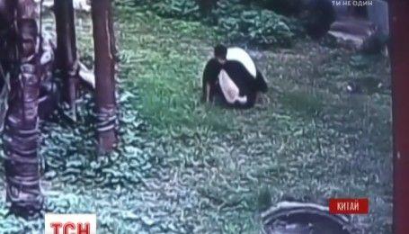 В Китае панда напала на мужчину, который перелез к ней в вольер
