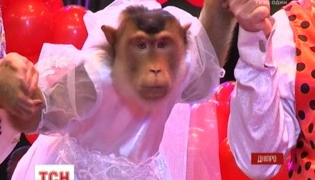 Праздничный стол и подарки: в Днепре отпраздновали обезьянью свадьбу