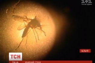 У Бельгії дослідники навчилися вбивати комарів страхом
