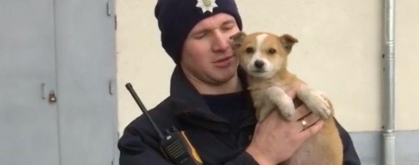 Розшукується господар. В Івано-Франківську патрульні врятували руденьке цуценя