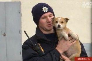 Разыскивается хозяин. В Ивано-Франковске патрульные спасли рыженького щенка