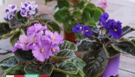 Самый простой способ размножения фиалок - садоводство для чайников