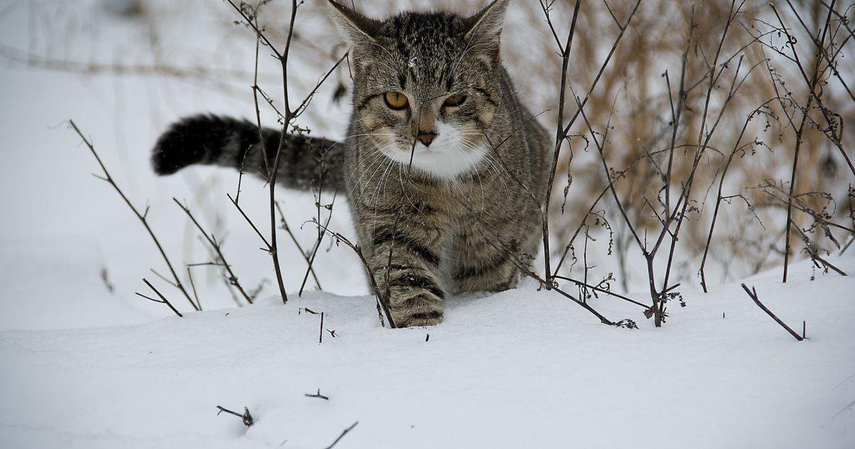 Довгоочікувана зустріч. У Британії котик повернувся до своєї хазяйки через 14 років