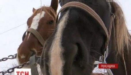 В селі на Рівненщині вигадали спосіб змусити хазяїв прибирати за тваринами