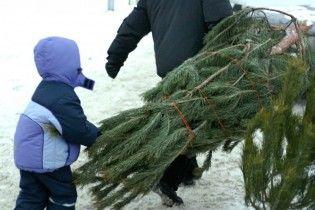 У Києві починають працювати новорічні ялинкові базари. Ціни та еко-тренд