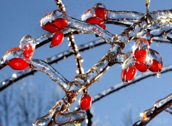 В останній день року українців чекає плюсова температура, але зі снігом