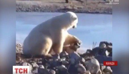 Полярный медведь подружился с домашней собакой