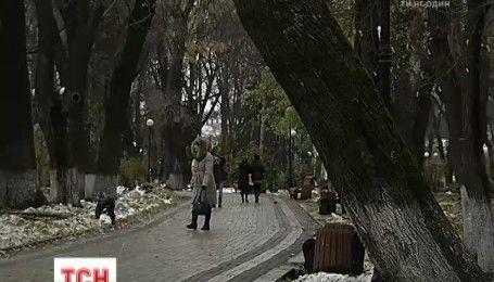 Медведи в Мариинском парке: зеленбудовци и скульпторы решили дать вторую жизнь сухостою