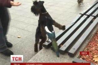 В Одесі собаки разом з сорокою підспівували гімн міста