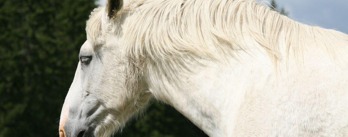 В США мужчину посадили за изнасилование лошади