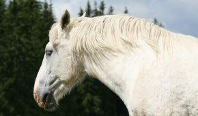 У США чоловіка ув'язнили за зґвалтування коня