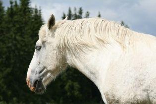 На Ровенщине 10-летний мальчик каждый день ездит в школу на коне