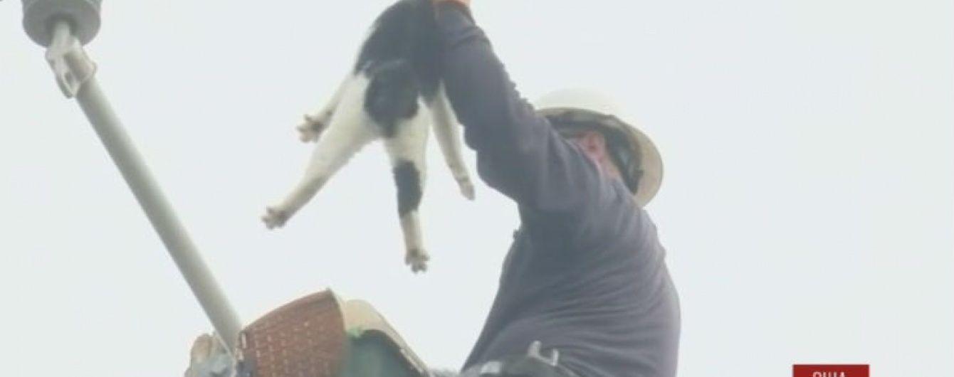 В США провели спецоперацию по спасению кота, который 7 дней просидел на столбе
