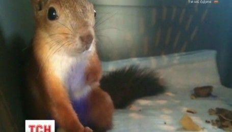 На Днепропетровщине волонтеры спасли маленького бельчонка, которого ударило током