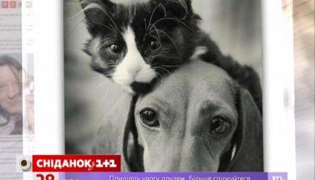 У Британії котик повернувся до своєї хазяйки після 14 років розлуки