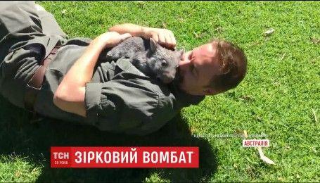 Сеть подорвало видео, на котором австралийский вомбат-сирота играет с работником зоопарка