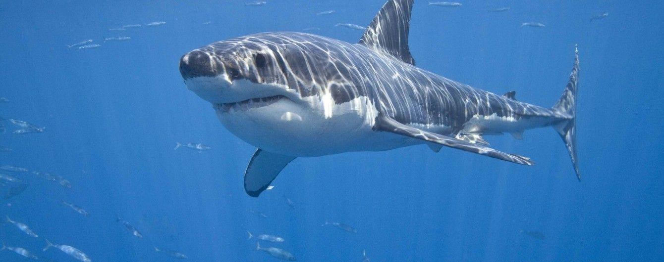 В Атлантическом океане на британку напала акула