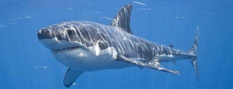 На Гавайях акула насмерть загрызла пожилого мужчину на отдыхе