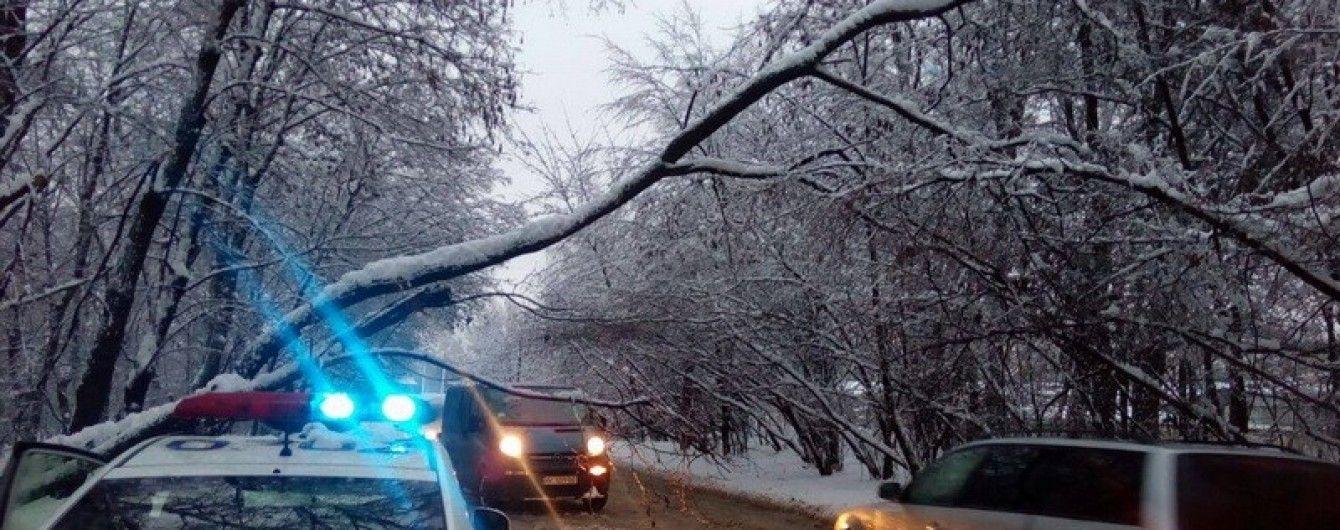 У Львові снігопад завалив дерево на дорогу