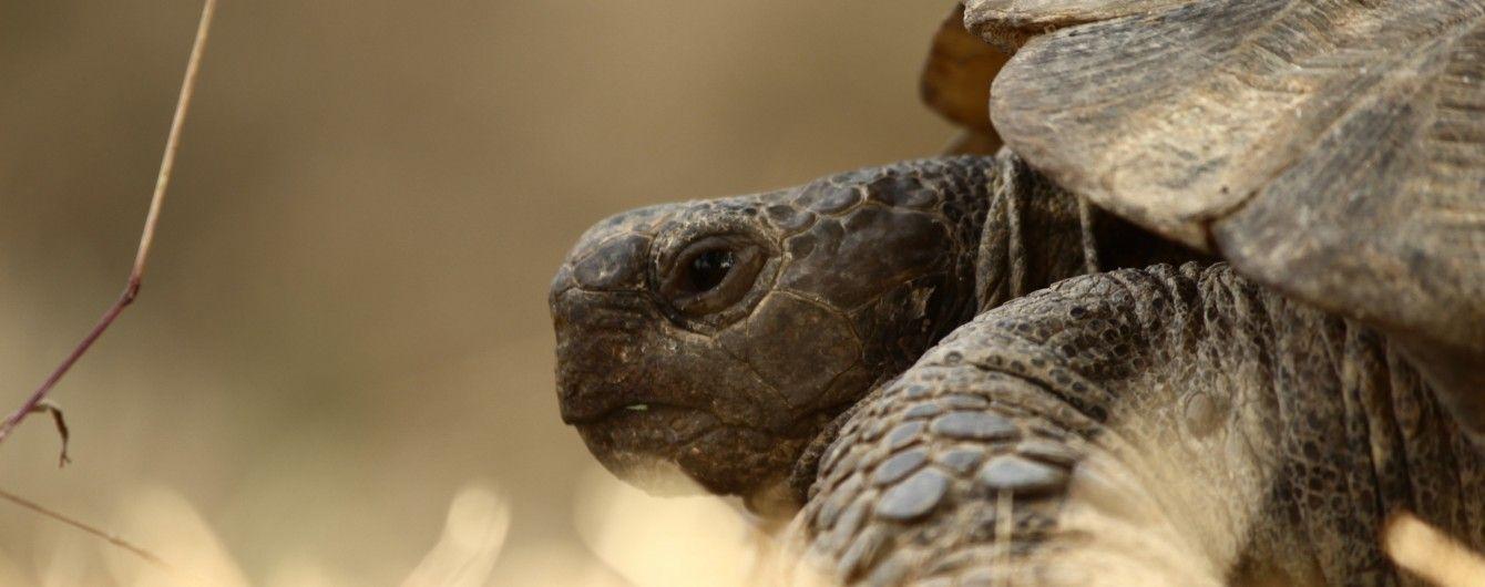 Черепаха допомогла береговій охороні США виявити 800 кг кокаїну