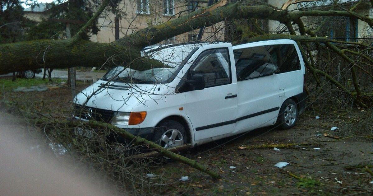 У Севастополі на авто впало дерево