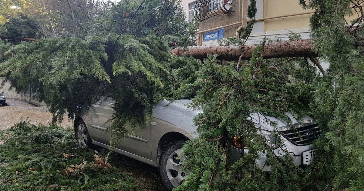 У Ялті на авто впало дерево