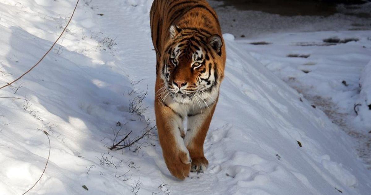 @ Киевский зоологический парк общегосударственного значения