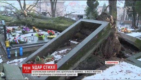Ураган в Словакии: на центральной площади сильного ветра не выдержала главная елка страны