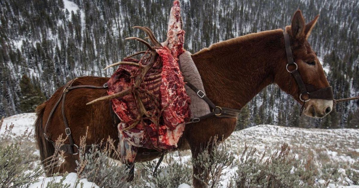 Заготовки лося і його цінні роги перевозили на старому мулі @ national geographic