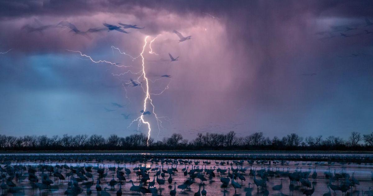 """Коли вечірня гроза освітлює небо біля міста Вуд Рівер, штат Небраска, близько 413 тисяч журавлів прилітають на мілководдя річки Платт Ця. Фотографія була вперше опублікована в серпні 2016 року. """"Те, що відбувається на Середньому Заході США, коли вода пішла?"""" @ national geographic"""