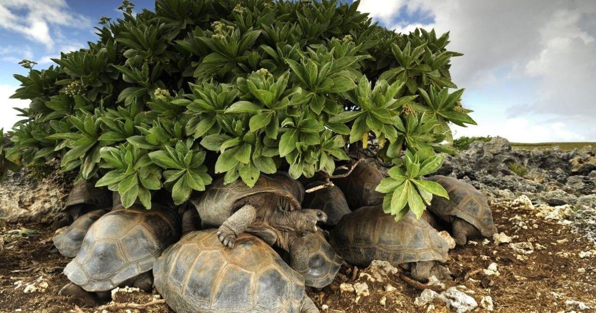 Черепахи ховаються від палкого сонця @ national geographic