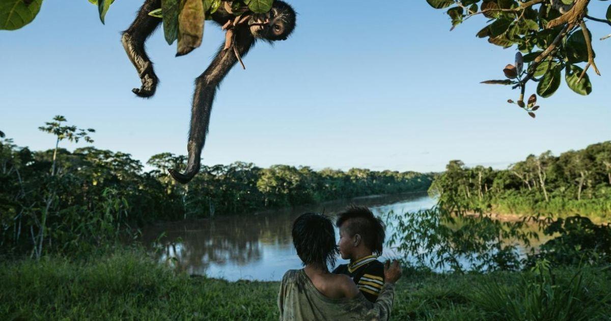 В Перу мавпа-павук є улюбленою домашньою твариною @ national geographic