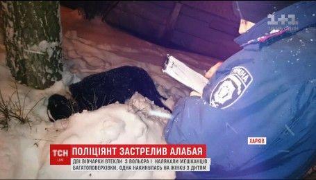 В Харькове два алабайя сбежали от хозяина и напали на женщину с ребенком