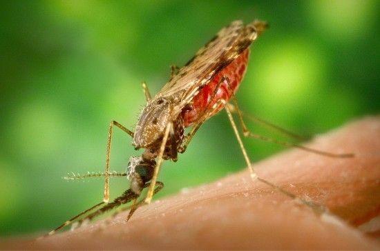 У Харкові підтвердили сьомий випадок малярії