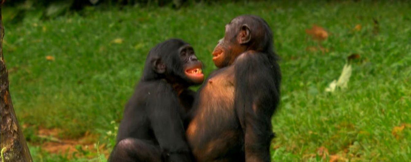 Міні порно роліки з тваринами