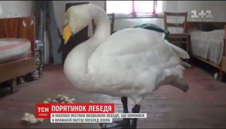 В Никополе горожане спасли лебедя из ледового плена