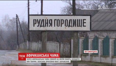 Африканську чуму свиней виявили на фермі в одному з сіл Житомирщини
