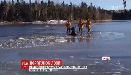 У Канаді рятувальники звільнили з льодової пастки лося