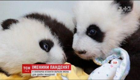 На сотий день після народження в зоопарку Атланти обрали імена двійні панденят