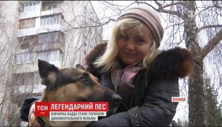 Фронтовой пес: известная сценаристка решила снять документальный фильм о овчарке-волонтере