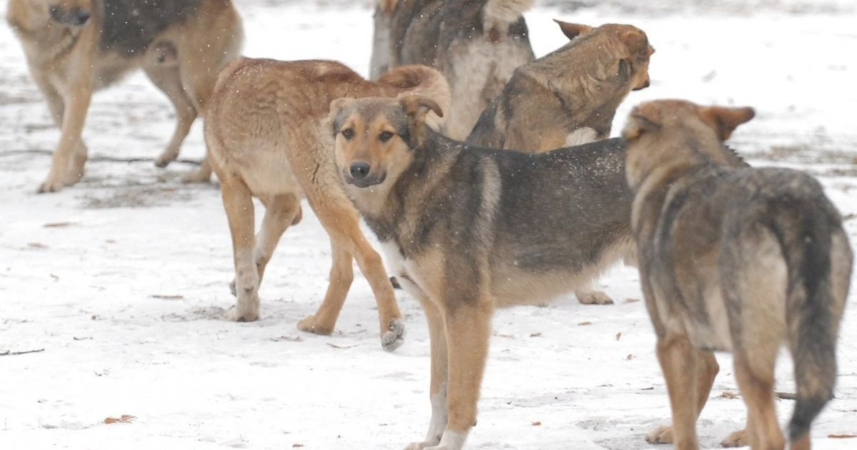 В Киеве догхантеры анонсировали массовое убийство собак в преддверии Евровидения - зоозащитники