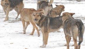 То ли покусана, то ли избита: винничанку, которая ухаживала за бездомными псами, нашли растерзанной