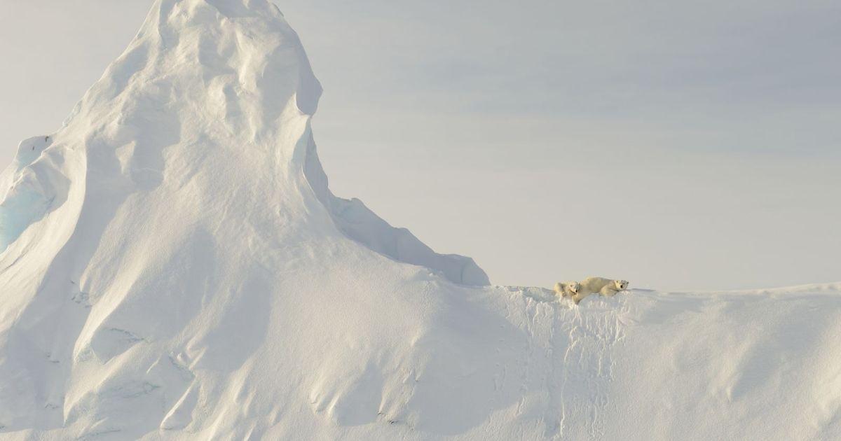 Поощрительный приз, номинация «Природа»: «Медведи на айсберге», Нунавут, Канада