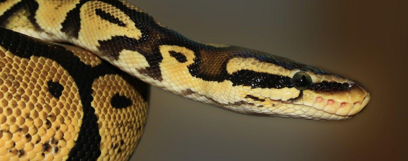 У Таїланді змія вкусила підлітка за пеніс, коли той був у туалеті