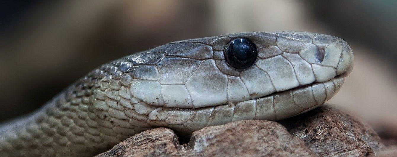Подарок разбитому сердцу: зоопарк Австралии разыгрывает возможность назвать ядовитого гада именем бывшего