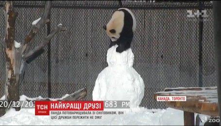 Мережу підірвало відео бійки панди та сніговика у зоопарку Торонто