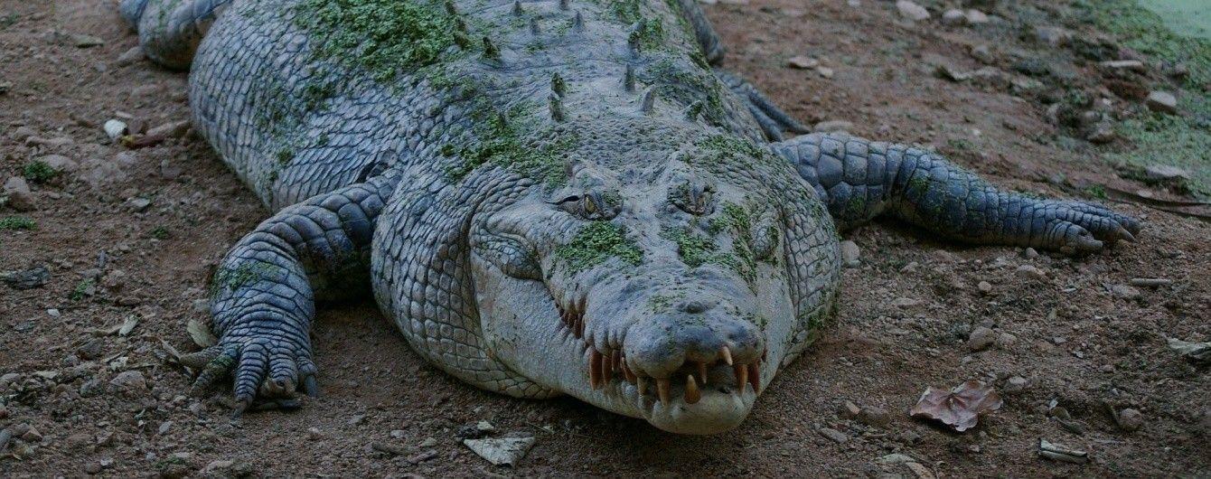 В Австралії туристи провели ніч на даху машини у річці повній крокодилів